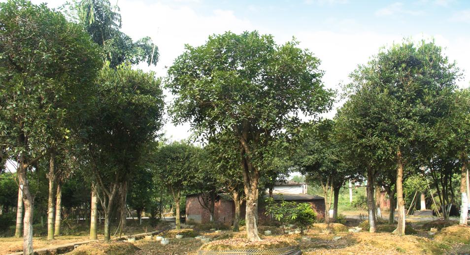 泸州兴隆园林第二基地